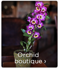 OrchidBoutiqueBox